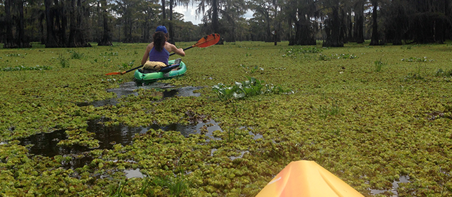 Caddo Lake State Park Kayaking Trip, Grand Saline Infestation, Paddling Trails, Personal Trainer, Great Outdoors