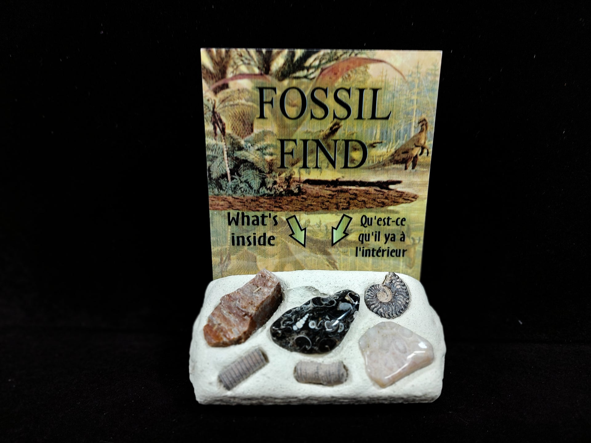 Fossil Find Dig it Out