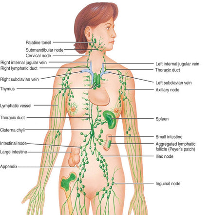 Learn your Lymph Care