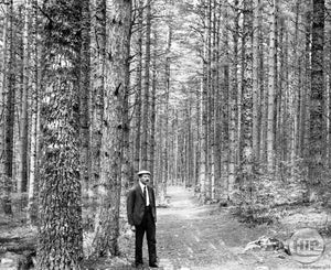 Man Standing in Cathedral Woods