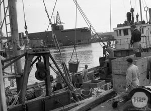 Workers Emptying Fishing Boats from a Boat in Gloucester Harbor, Massachusetts