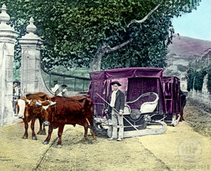 Carriage Pulled by Bullocks