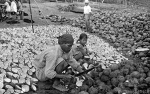 Natives Chopping Coconuts