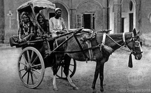 Horse and Carriage Delhi India