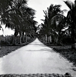 Avenue of the Palms