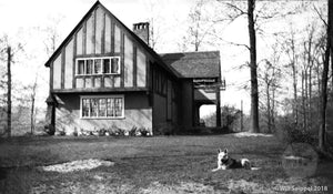 Backyard of a NY area Stucco Tudor House with a German Shepherd in the yard 1930's