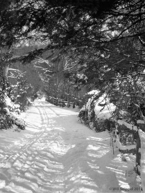 Deep Snow Covered Road Going Through Dense Woods Near Princeton NJ 1930's