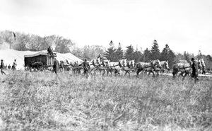 10 Dapple Percherons Pulling a Circus Baggage Wagon Across a Lot
