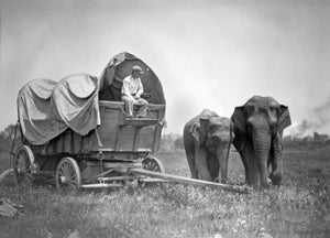 Conestoga Wagon with Handler & Two Asiatic elephants