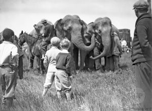 Female Asiatic Elephants with Trainers and Children