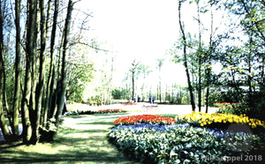 Flower Garden and Foliage