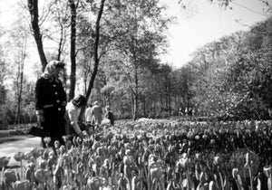 Women Admiring Tulip Gardens at a Beautiful Park in Holland, 1950s