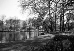 Deciduous Trees and Flower Gardens Lining a Lake in Early Spring, Holland 1950s