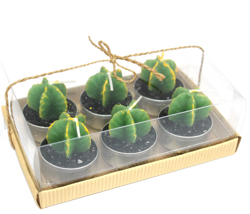6 Monks Succulent Cactus Tea Light Gift Box - Afroquarter