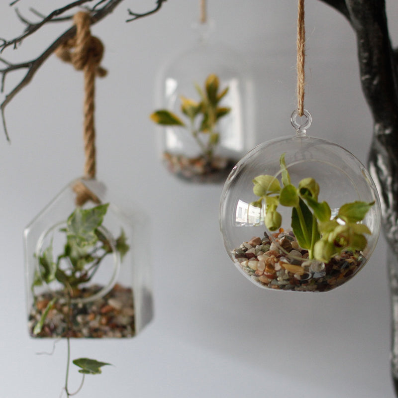 Oval Hanging Glass Terrarium With Rope - AQ Online