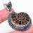 Ammonite Fossil Gemstone Vintage Jewelry Pendant 2.1 Inches RP151