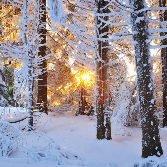 Frosty Christmas Sunrise Christmas cards, pack of 10