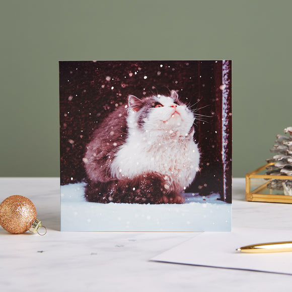 Snow Cat Shelter Charity Christmas Cards