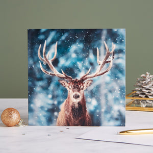 Magnificent Stag Shelter Charity Christmas Cards