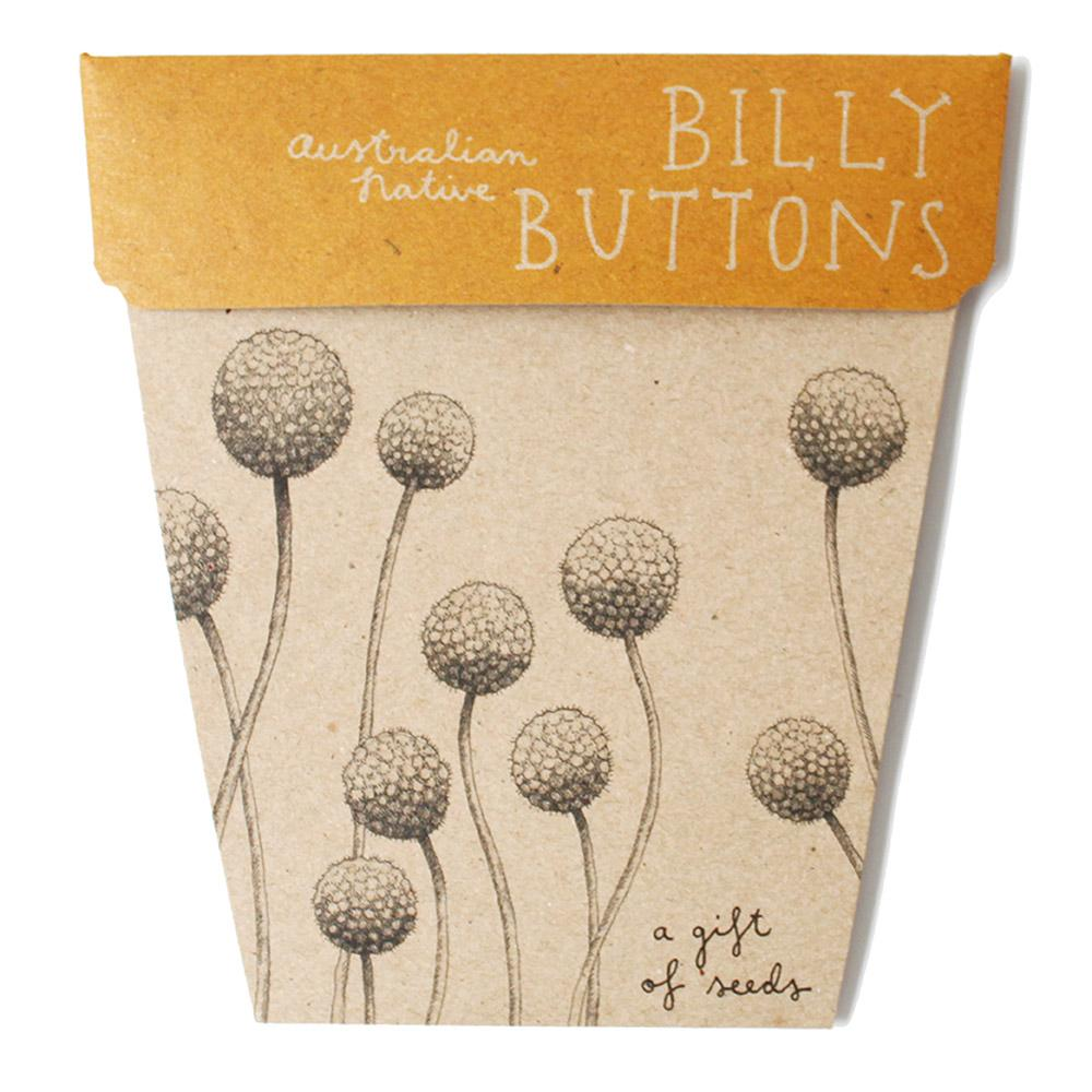Billy Button Australian Native Gift of Seeds Greeting Card Greeting Card Sow 'n Sow