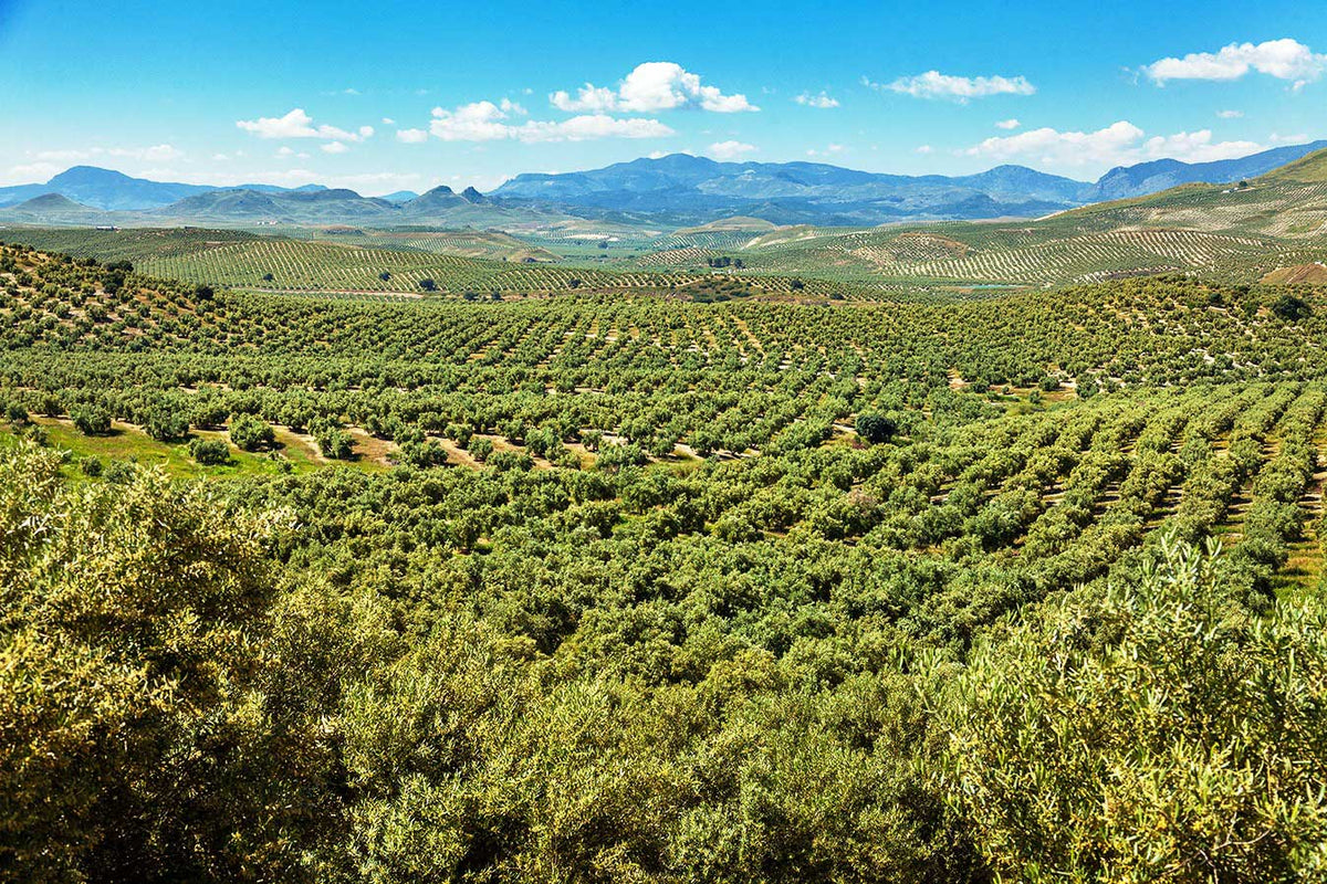Supplier focus : Castillo de Canena - thebiodynamic.store