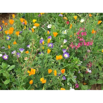 Summer Splendour Flower Mix Biodynamic Seeds - Organic and Demeter Certified
