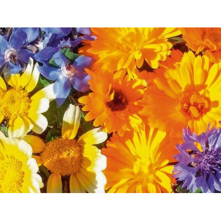 Edible Flower Mix Biodynamic Seeds - Organic and Demeter Certified brought to you by TheBiodynamic.store