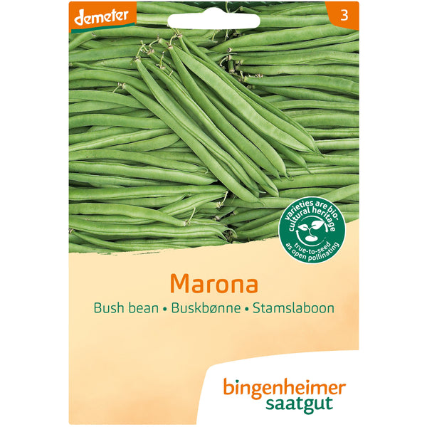 Bush bean 'Marona'. Organic, biodynamic and Demeter certified.