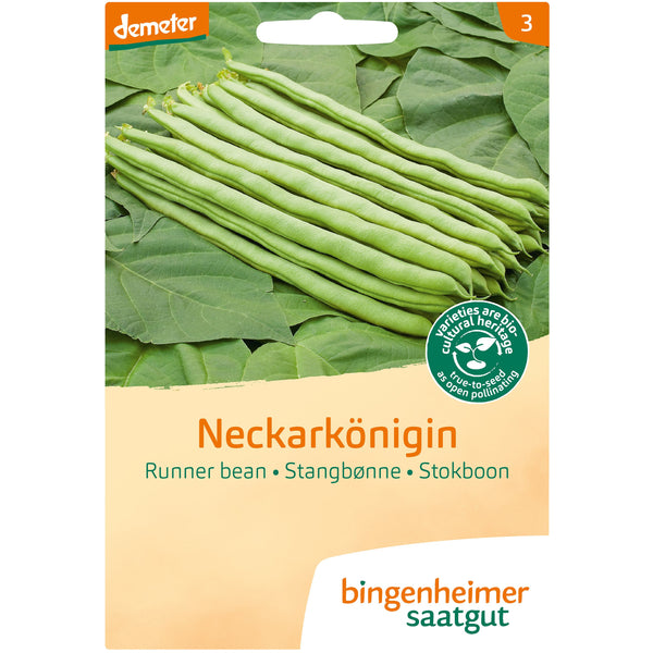 Pole Bean 'Neckarkönigin' Biodynamic Seeds - Organic and Demeter Certified brought to you by TheBiodynamic.store