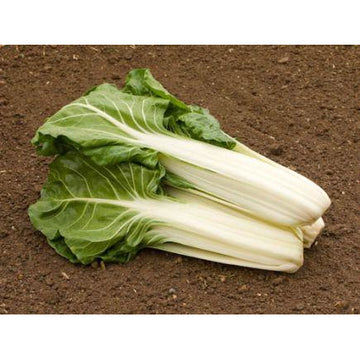 Swiss Chard Biodynamic Seeds - Organic and Demeter Certified