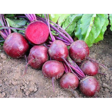 "Beetroot ""Robuschka"" Biodynamic Seeds - Organic and Demeter Certified"