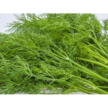 Dill Biodynamic Seeds - Organic and Demeter Certified