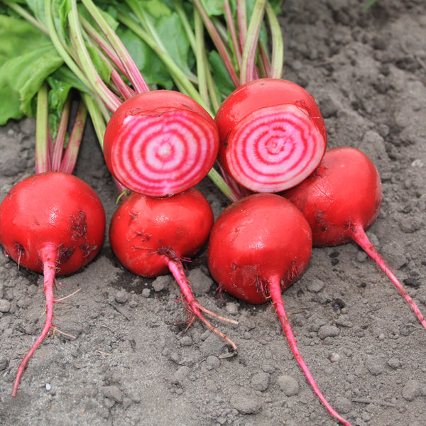 Beetroot 'Tonda Di Chioggia' Biodynamic Seeds - Organic and Demeter Certified brought to you by TheBiodynamic.store