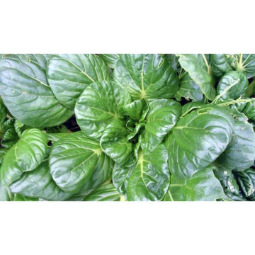 Seed Co-Operative Pak Choi 'Tatsoi' 250 Seeds. Biodynamic and Demeter certified