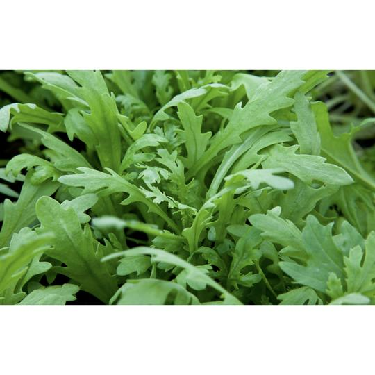 Seed Co-Operative Salad Green ' Chop Suey Green' 500 Seeds. Biodynamic and Demeter certified