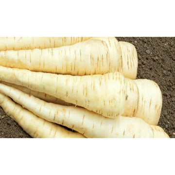 Seed Co-Operative Parsnip 'Tender and True' 500 Seeds. Biodynamic and Demeter certified