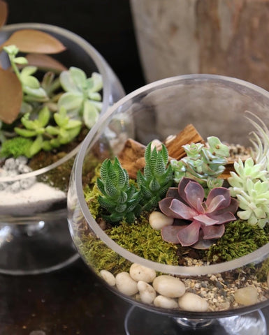 Classes:Terrarium Making 11/05/19