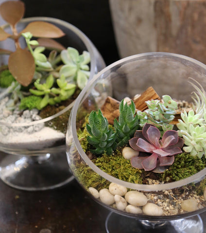 Terrarium making class July 18th, 2018