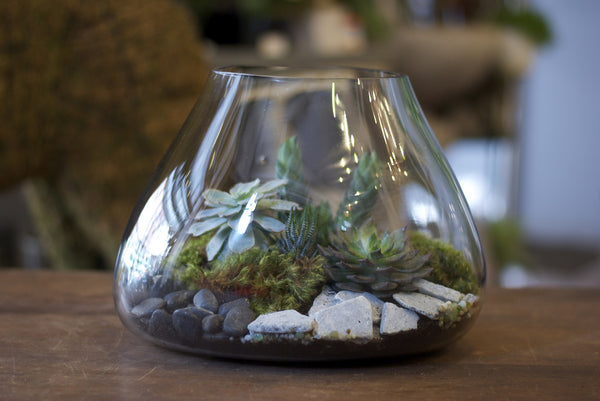Recycled Glass Volcanic Terrarium!