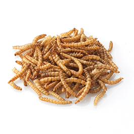 Dried Mealworm 500g