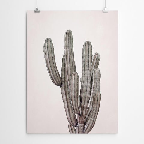 Brown Cactus Canvas