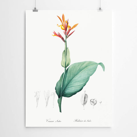 Cannas Vintage Wall Art