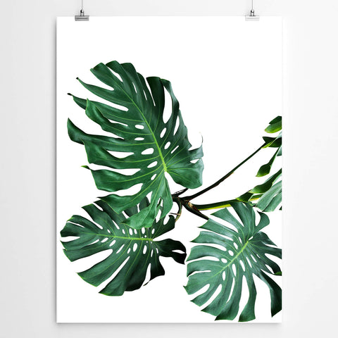Tropical Monstera Wall Art
