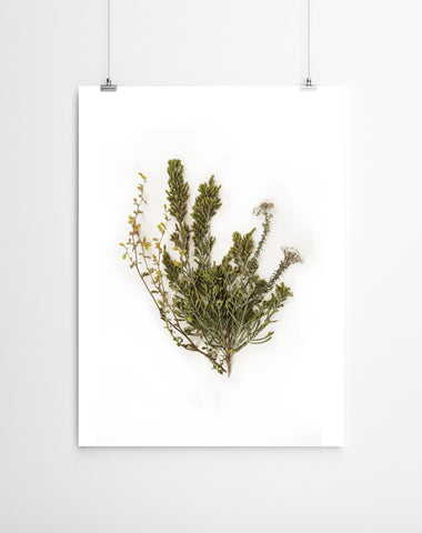 FYNBOS WALL ART