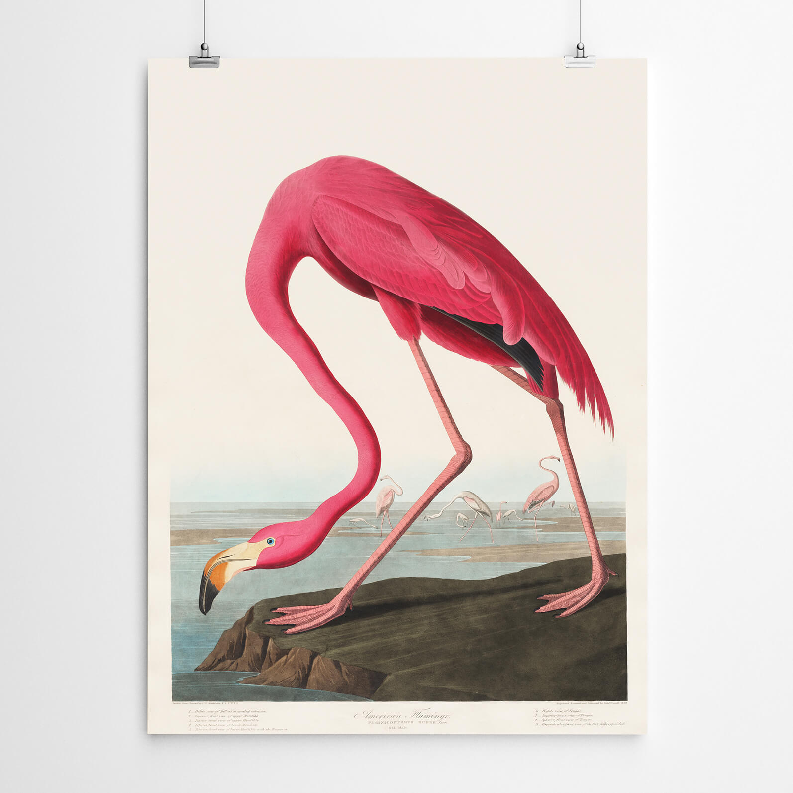 Flamingo Vintage Bird Art