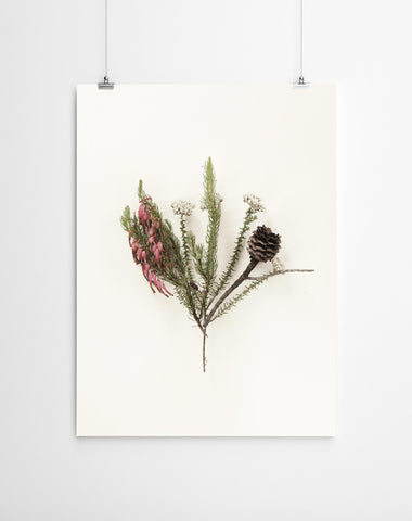 Fynbos Canvas Wall Art