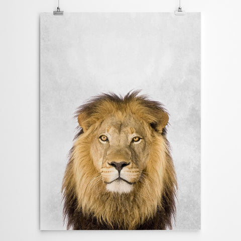 Lion art print Cape Town
