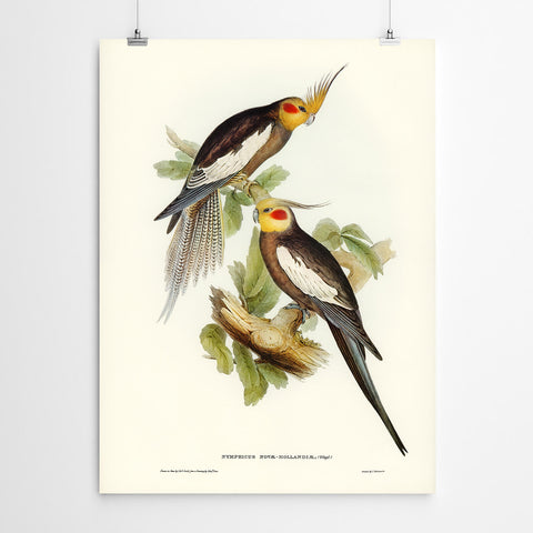 Lymphicus Vintage Art Bird Print