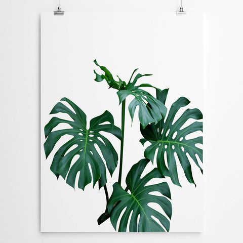 Wall Art Tropical Monstera