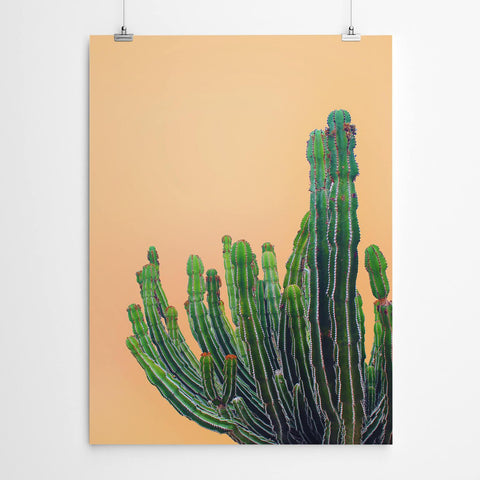 Orange Cactus Art Print